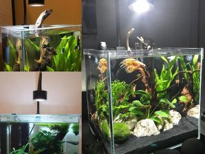 LUMINI AQUASCAPING