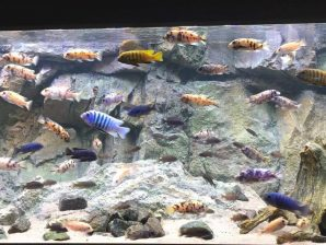 Akvarie LED lys SÆT TIL CICHLIDER