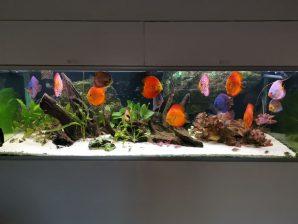 Akvarie LED lys SÆT TIL DISCUS